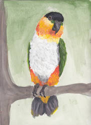 Caique Finished Like No Other by RodobagheadDN