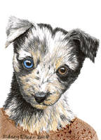 Shepherd Pup ACEO by sidneyeileen