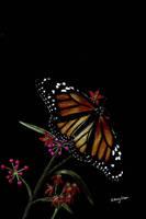 Butterfly by sidneyeileen