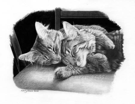 Kitten Love by sidneyeileen