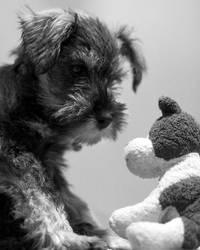 Doggie by mole2k