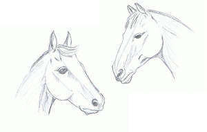 Horses, profile and 3-4 study by enkelikitten