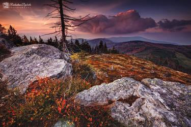 Violet sunset by Dybcio