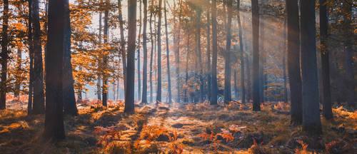 Autumn forest by Dybcio