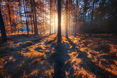 Burning forest by Dybcio