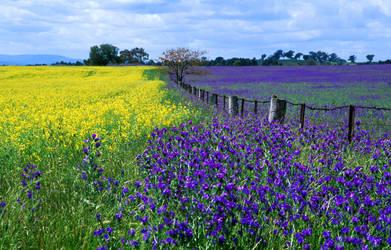 Purple invasion by O-Gosh