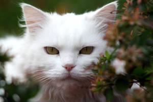 white fluffy neighbour by O-Gosh