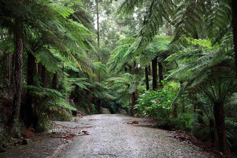 rainforest by O-Gosh