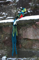 Crocheted Quetzal by Soggy-Wolfie