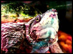 Snapping Turtle. by Lord-Imhotep