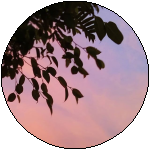 Generic Sunset Divider #9 by RariDecor