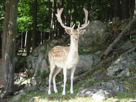 Deer by masamune21