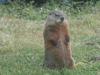 Groundhog 2 by Zumiex