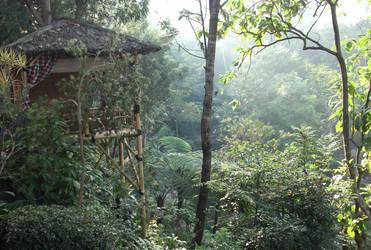 jungle by ciuyanto