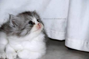 Here kitty, kitty.... by Thaaaaaaaal