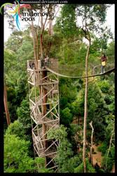 Canopy Bridge by Thaaaaaaaal