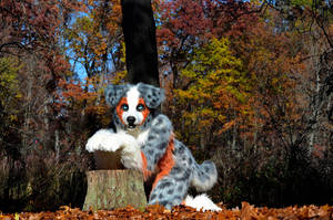 Tycho Aussie at tree 2 by Crixans