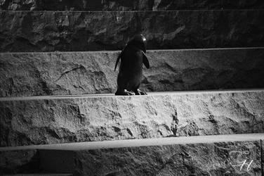 Den melankoliska pingvinen by Saraldor