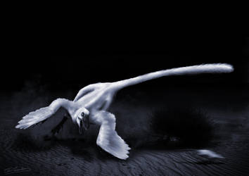 Moonlight Runner by ChrisMasna