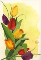 Tulips by Flingling