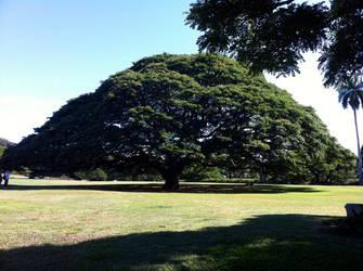 Hawaii 2011: The Hitachi Tree by Sagitari-Seiza-1213