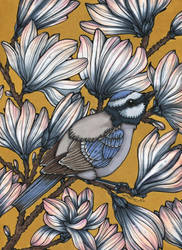 Blue bird by CathM