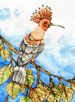Hoopoe by CathM