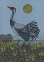 Crane by CathM