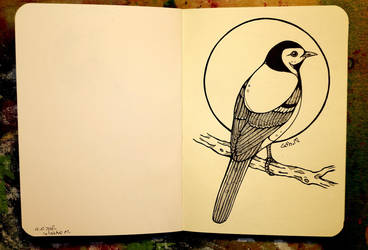 Inktober 18 - White wagtail by CathM