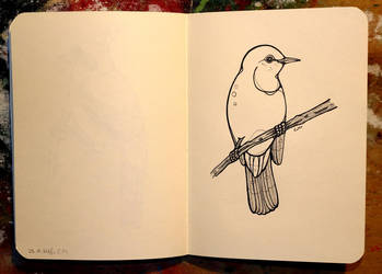 Inktober 30 - Great reed warbler by CathM