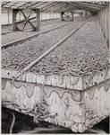 Anatomy of a worm factory by Bernardumaine