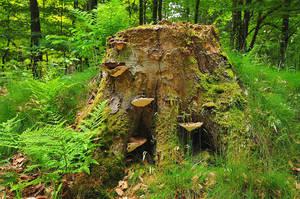 mushroom by Ger-hard