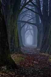 The dark forest path by DjLuke9