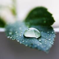 Rain by Aiae