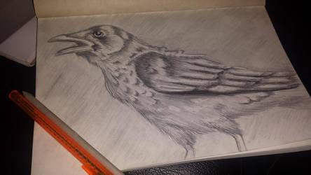 Crow by DaliteDraws
