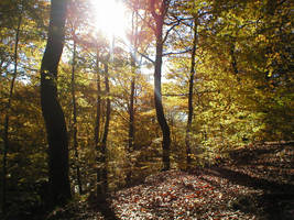Landscape stock 69 autumn wood by Finsternis-stock
