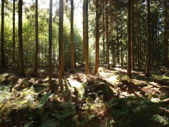 fern in forest by Finsternis-stock