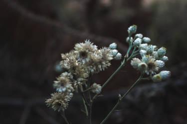 Flower by verbluten