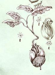 Seedling by Dayglowfrog