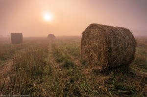 Foggy Field by topperGfx