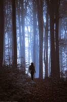 Into The Woods by topperGfx