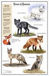 Foxes of Eurasia by KatGirlStudio