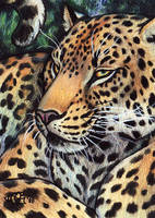 Lounge Leopard ACEO by Goldenwolf