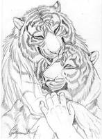 Cuddly Couples - Tigers01 by Goldenwolf