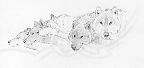 The Pack by Goldenwolf
