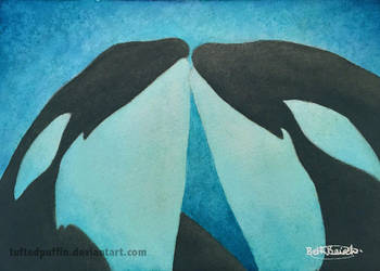 Orca Kisses by tuftedpuffin