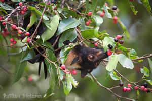 Flying Fox's Figgy Breakfast by tuftedpuffin