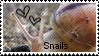 Snail Stamp by muddyputty