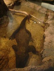 Dwarf Crocodile by Archanubis