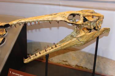 Platecarpus Skull by Archanubis